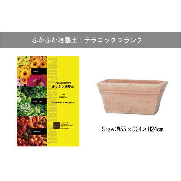 インタープランツネット テラコッタプランター+ふかふか培養土 14L ブラウン 1鉢 (直送品)