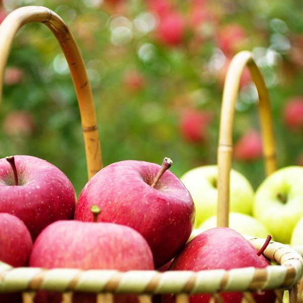 青森県産 甘味系りんご3種詰め合わせ42