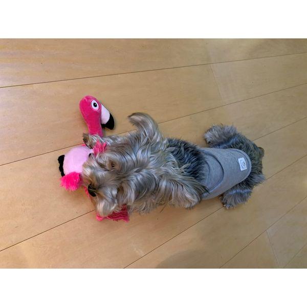 フラミンゴ 犬用 おもちゃ