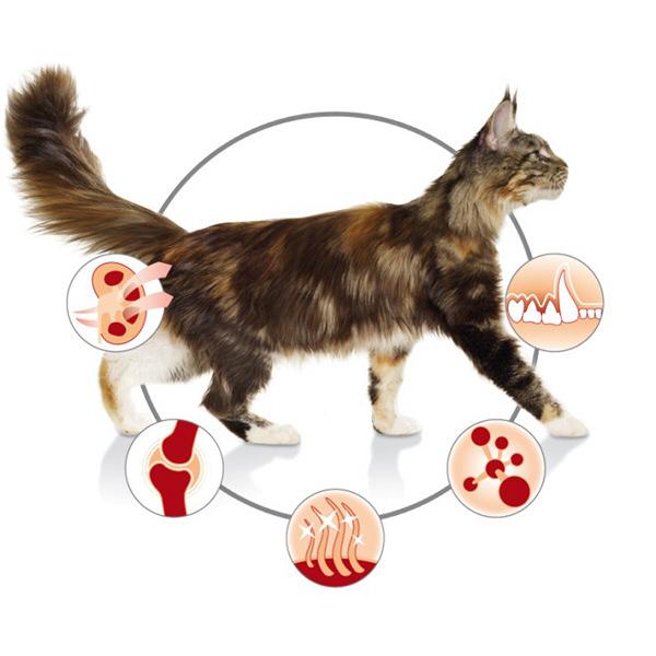 成猫用2.5kg