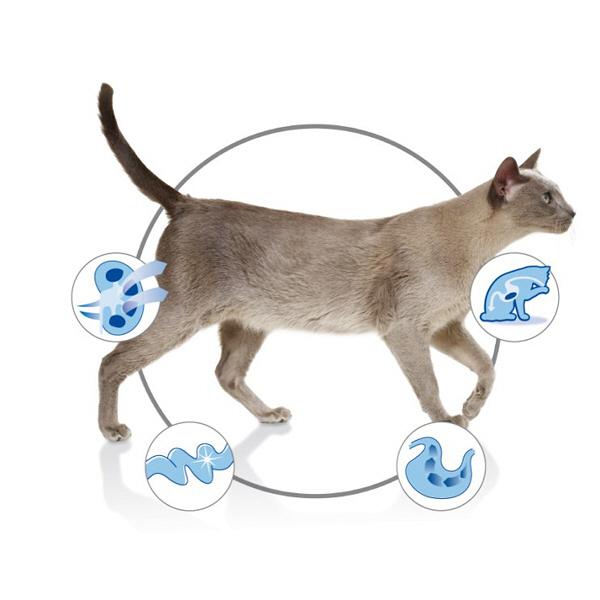 室内飼い猫用2.5kg