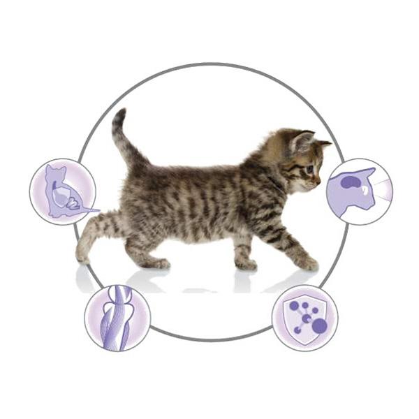 子猫用2.5kg