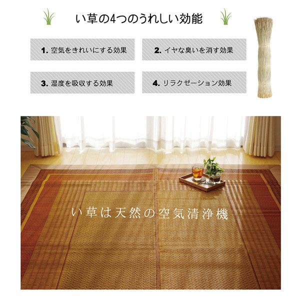い草ラグカーペット 『DXランクス総色』