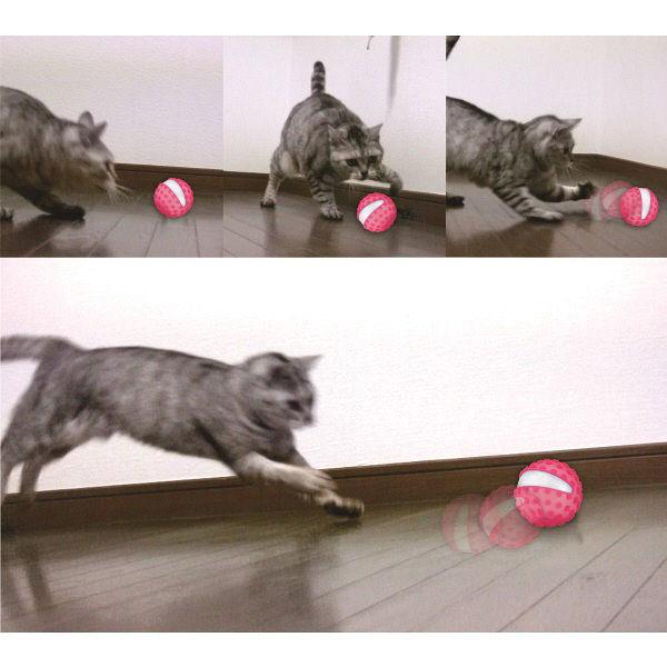 ゴーゴーボール猫用 1個 マルカン×2個