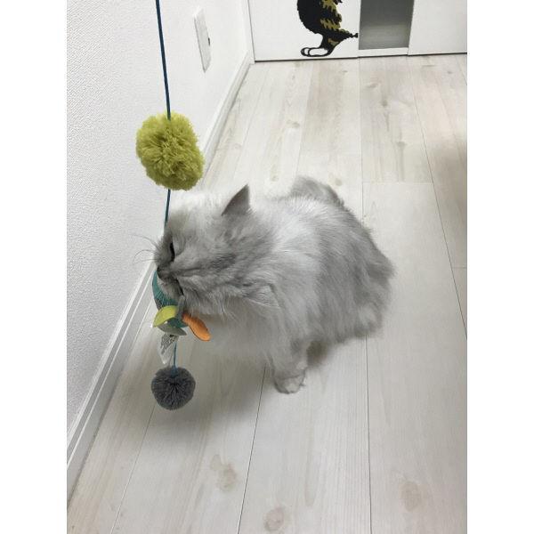 afp ワンダーバード 猫用 おもちゃ
