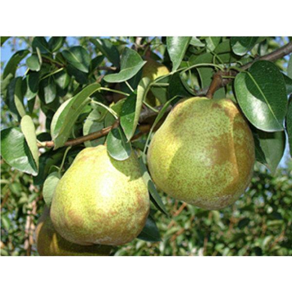 山形県産 贅沢フルーツ3種セット