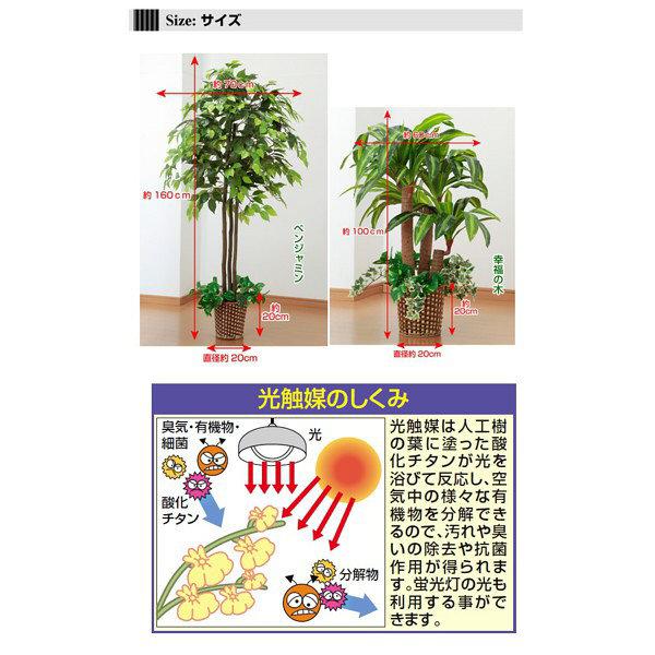 ファミリー・ライフ 人工観葉植物ベンジャミン&幸福の木2個セット (直送品)