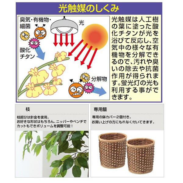 ファミリー・ライフ 人工観葉植物 ベンジャミン2個セット 1台 (直送品)