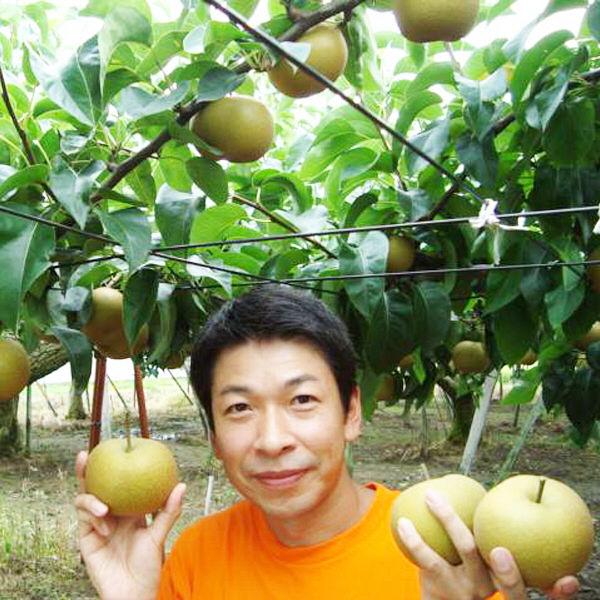 新潟県産 和梨南水 約3kg(7-8玉)