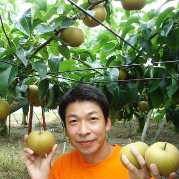 新潟県産 大玉和梨「新高」3kg
