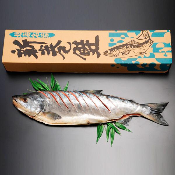 北海道 新巻鮭姿切れ目入り