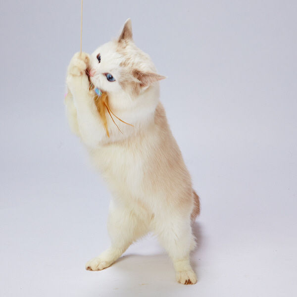 CAT TOY 猫用 ふわふわトンボ