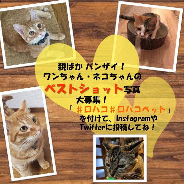 ロイヤルカナン猫用ユリナリーS/Oパウチ