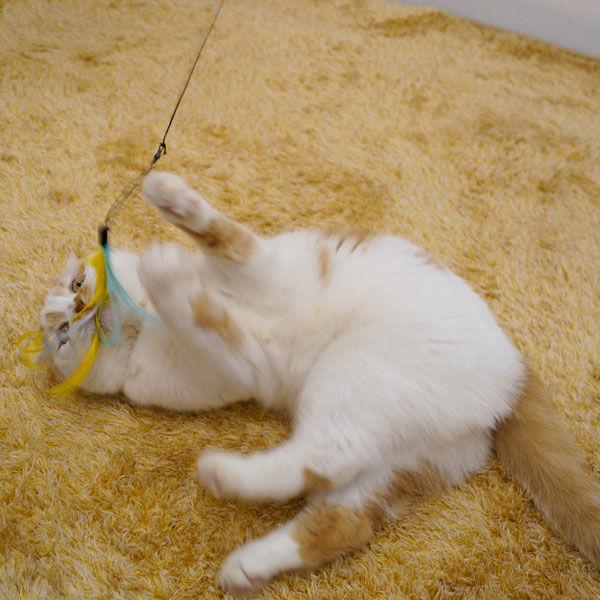 じゃれ猫 猫のお好みじゃらし 交換用×3