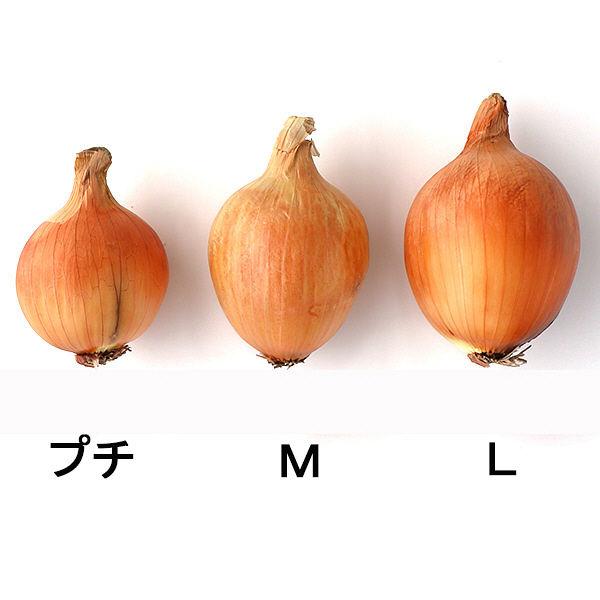 玉ねぎスマイルボールM+プチ混合5kg