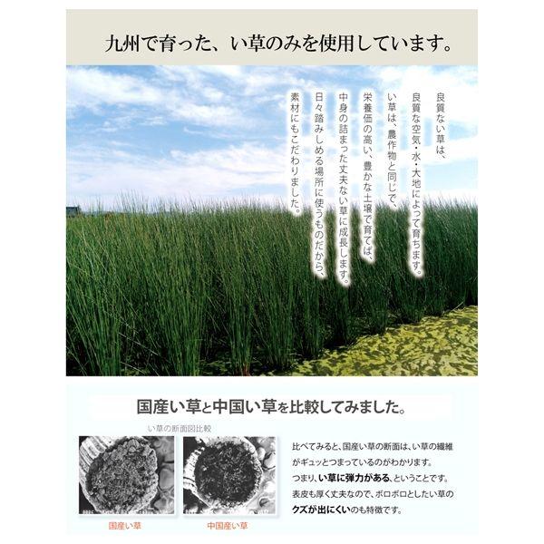 イケヒコ 玄関マット 室内 国産い草 『Fゾラン』 幅600×奥行900mm ネイビー 8241360 1枚(直送品)