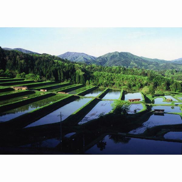 【精白米】島根県奥出雲産仁多米5kg