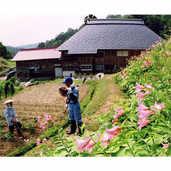 【精白米】山形県飯豊の米つや姫5kg