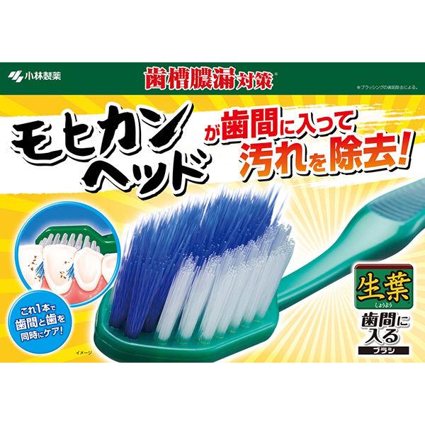 生葉歯間に入るブラシコンパクトふつう