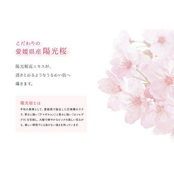 限定 モッチスキン 吸着泡洗顔 桜