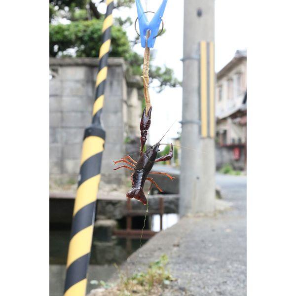 池田工業社 カニハンター(カニ釣り) 350320 1個(直送品)