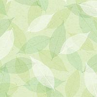 包装紙 四才判 シアーリーフ 49-540 1セット(50枚包み) タカ印 (取寄品)