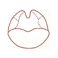 サンビー 人体図ゴム印 咽喉45 JING-45 (取寄品)
