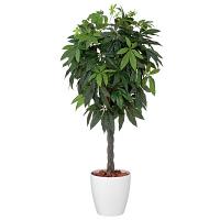 アイコム 人工観葉植物 人工樹木 パキラ AGA-1503N 1鉢