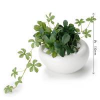 シュガーバイン/白陶器(同型2個セット) PRAS-0163 1セット(2個:1種×2個) プリマ (直送品)