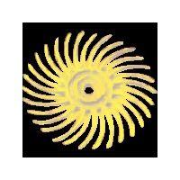 """スリーエム ジャパン 3M ラジアル・ブリッスルディスク 400 3/4""""X1/16"""" BRDISC40034  311ー1130 (直送品)"""
