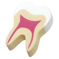 【アウトレット】Ciメディカル 説明用「歯の消しゴム」 1袋(100個入)
