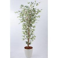 アイコム 人工樹木 フィカスハワイアン 1.5m 1鉢 (取寄品)
