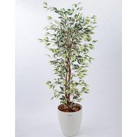 アイコム 人工樹木 フィカスハワイアン 1.8m 1鉢 (取寄品)