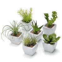 プリマ 多肉植物 ミニベース 6個セット PRAS-0279 1セット(6個:6種×1個ずつ) (直送品)プリマ