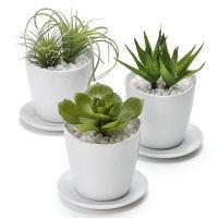 プリマ 多肉植物 皿付きベース 3個セット PRAS-0280 1セット(3個:3種×1個ずつ) (直送品)プリマ
