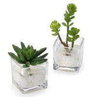 プリマ フェイクウォーター キューブ 多肉植物 2個セット PRAS-0282 1セット(2個:2種×1個ずつ) (直送品)プリマ