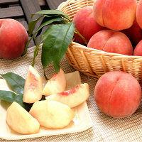 山形県産白桃 約3kg(9-11玉)品種おまかせ 【予約販売】 (直送品)