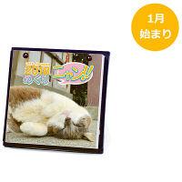 卓上カレンダー日めくり 猫 1000093349 アートプリントジャパン (直送品)
