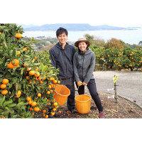 瀬戸内産 ネーブルオレンジ 約2kg