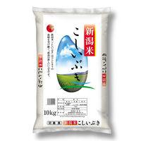米 10kg 新潟県産 こしいぶき 10kg 【精白米】 令和2年産 お米 白米
