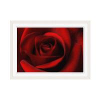 アートプリントジャパン 「Rose」 フレーム/M/ホワイト 1枚