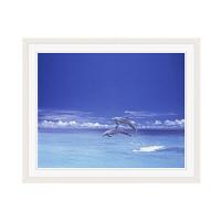 アートプリントジャパン 「青い海とイルカ」 フレーム/M/ホワイト 1枚