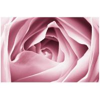 アートプリントジャパン 「Close-up View of Pink Rose」 キャンバス/M 1枚