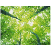 アートプリントジャパン 「森林と木漏れ日」 キャンバス/M 1枚