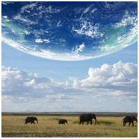 アートプリントジャパン 「地球とアフリカ象」 キャンバス/XL 1枚