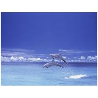 アートプリントジャパン 「青い海とイルカ」 キャンバス/M 1枚
