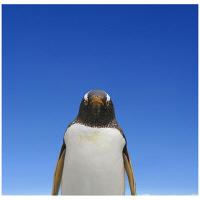 アートプリントジャパン 「青空とペンギン」 キャンバス/S 1枚