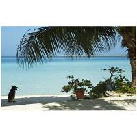 アートプリントジャパン 「lagoon with palm frand and watch dog」 キャンバス/L 1枚