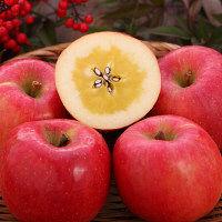 【生産者限定】幻蜜入りりんご 山形県産「高徳」約2kg(直送品)【予約販売】