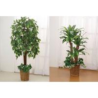 ファミリー・ライフ 人工観葉植物 2点セット(ベンジャミン&幸福の木) 幅700×奥行200×高さ1400mm (直送品)